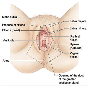labiaplasty_1